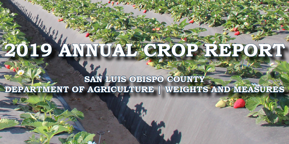 2019 Crop Report: San Luis Obispo County Agriculture Reports Second-Highest Value Year on Record