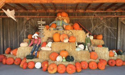 Harrowing Halloween Fun!