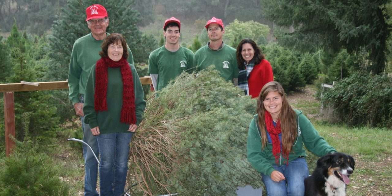 Hidden Springs Tree Farm Ready for Season