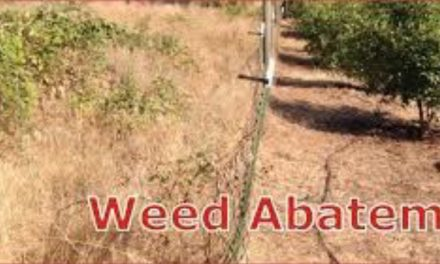 Weed Abatement Inspections Begin May 1