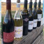 Italian Varietal Wines of Paso Robles