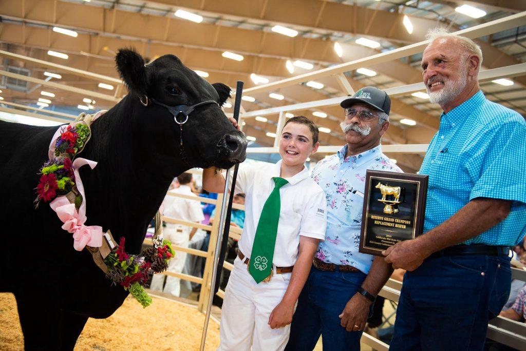 LivestockAuction2