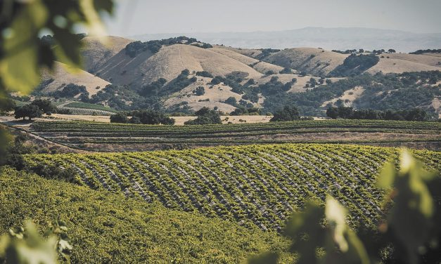 Paso Robles Wine Country Adapts with Variety of Coping Skills