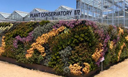 San Luis Obispo Botanical Garden Presents: The Secrets of Living Walls