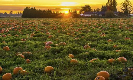 County: Have a Safer Halloween During COVID-19