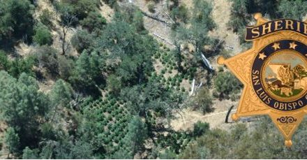 Arrest Made in Two Illegal Trespass Cannabis Grows in Northern San Luis Obispo County