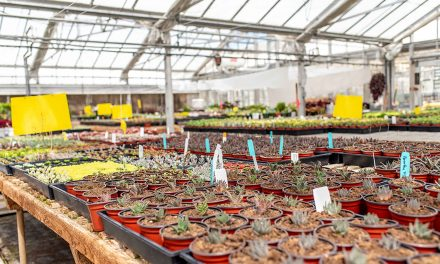 Reservations Now Available for Student-Run Succulentopia Plant Sale at Cal Poly