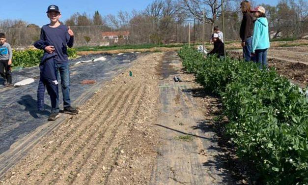 Templeton Hills Community Farm Prepares for First Anniversary Celebration