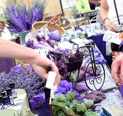 Paso Robles Downtown Main Street Assoc. Cancels Olive and Lavender Festival