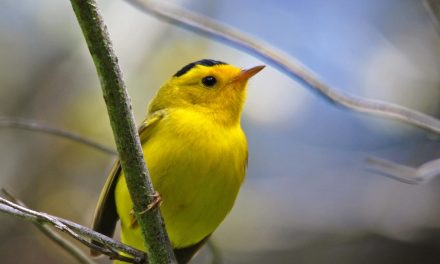 Cal Poly Study Shows Birdsongs Benefit Humans